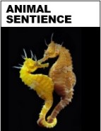 Animal Sentience journal cover